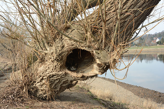 Katze in Baumhöhle, CC BY-NC