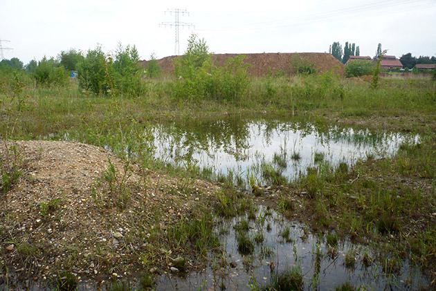 Biotop mit flachen Tümpeln