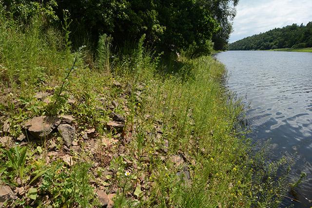 Flussufer, Schlangenbiotop